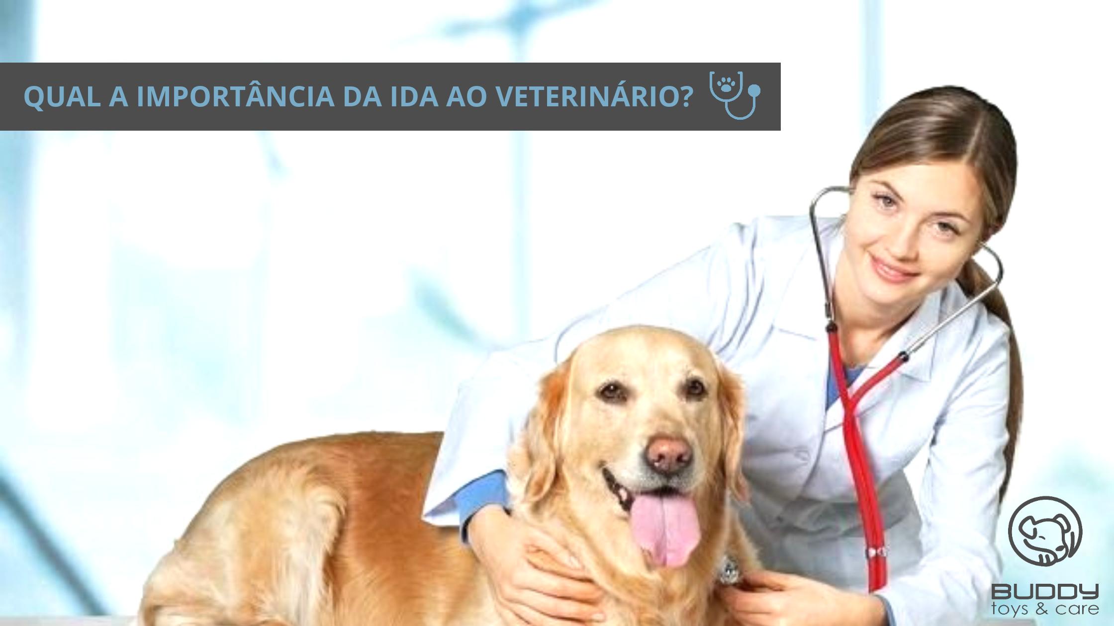 importância da ida ao veterinário