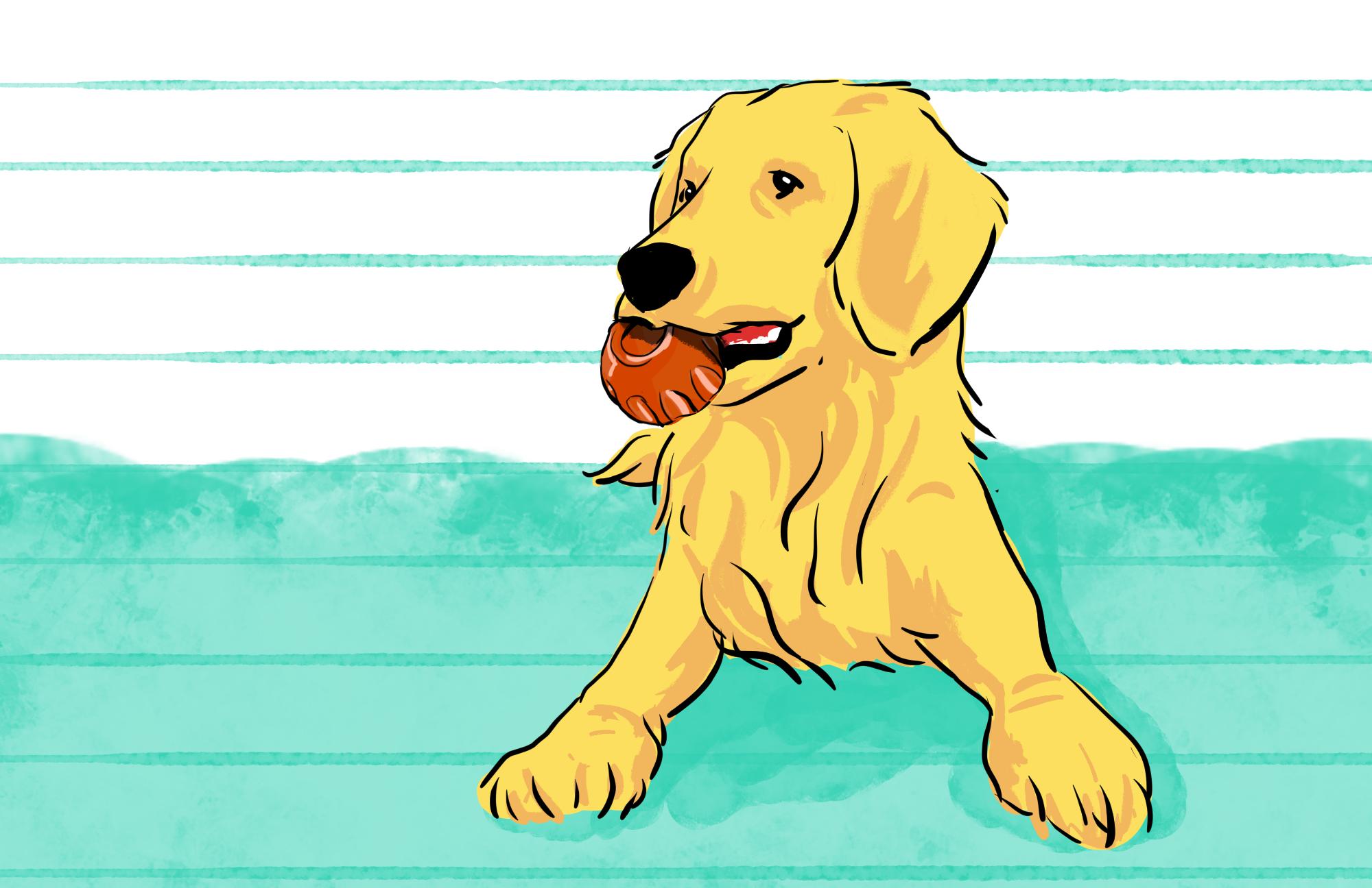 Por que os cachorros amam brincar com bolas?