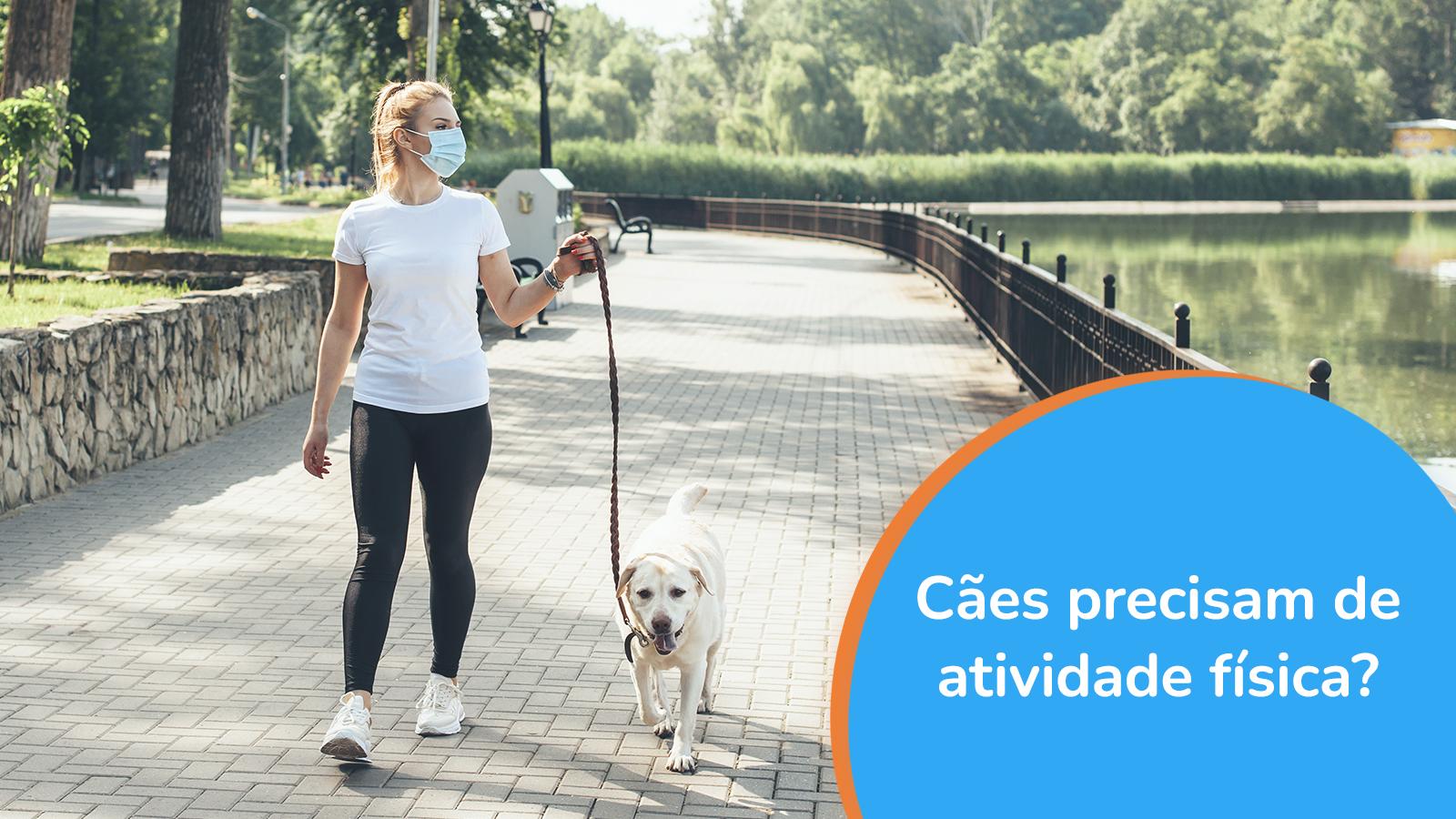 Cães precisam de atividade física?
