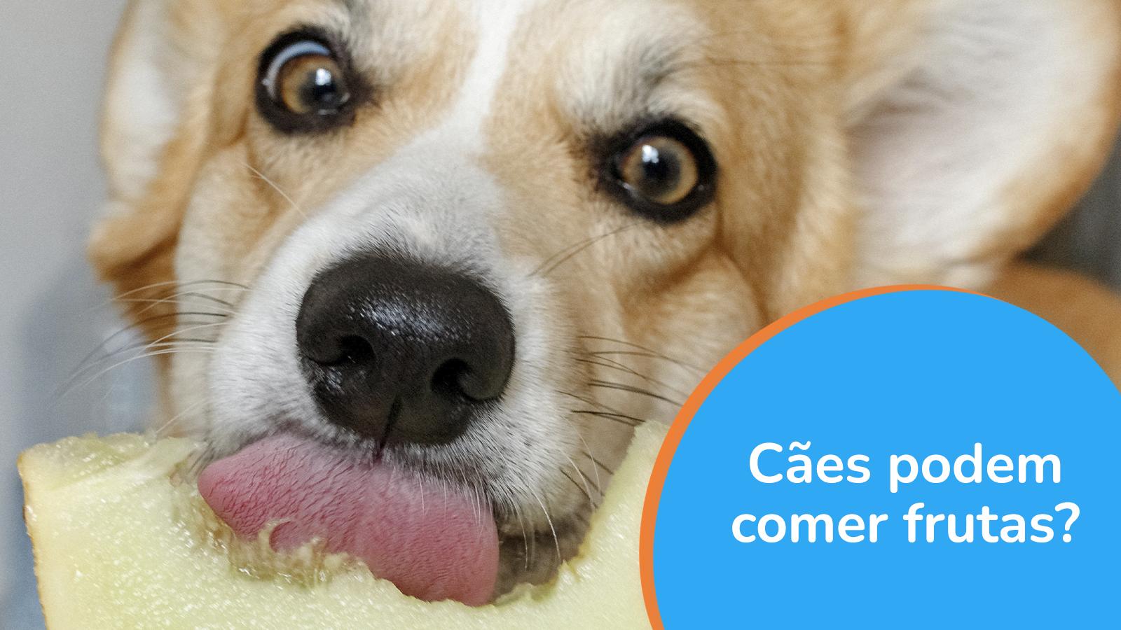 Cães podem comer frutas?