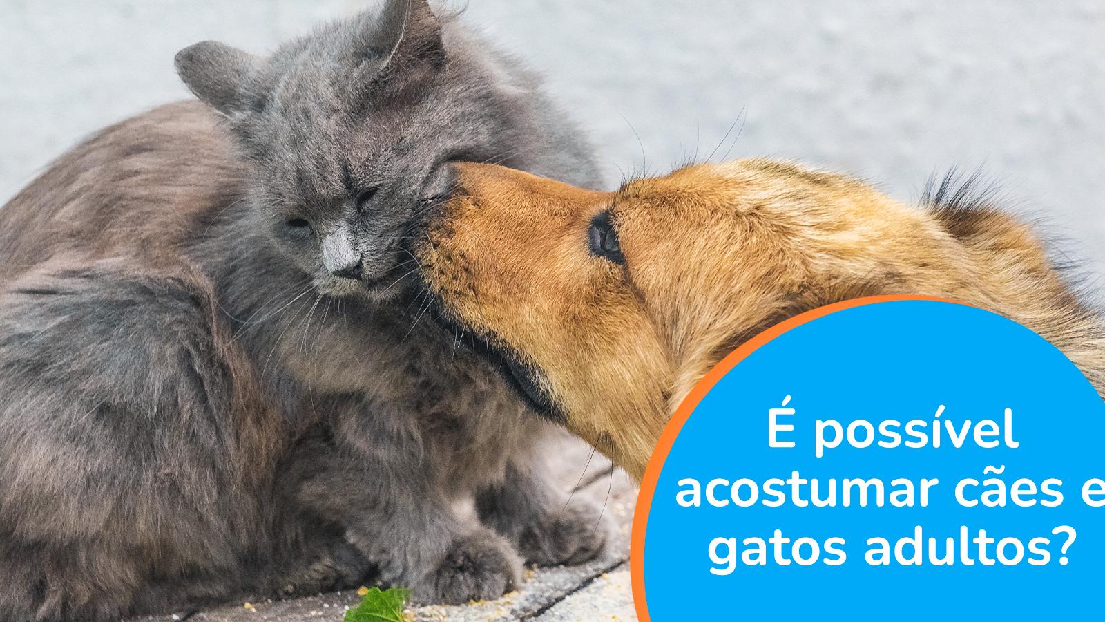 É possível acostumar cães e gatos adultos?