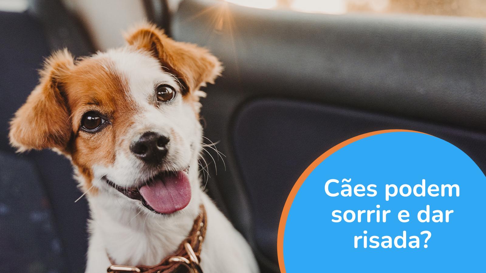 Cães podem sorrir e dar risada?