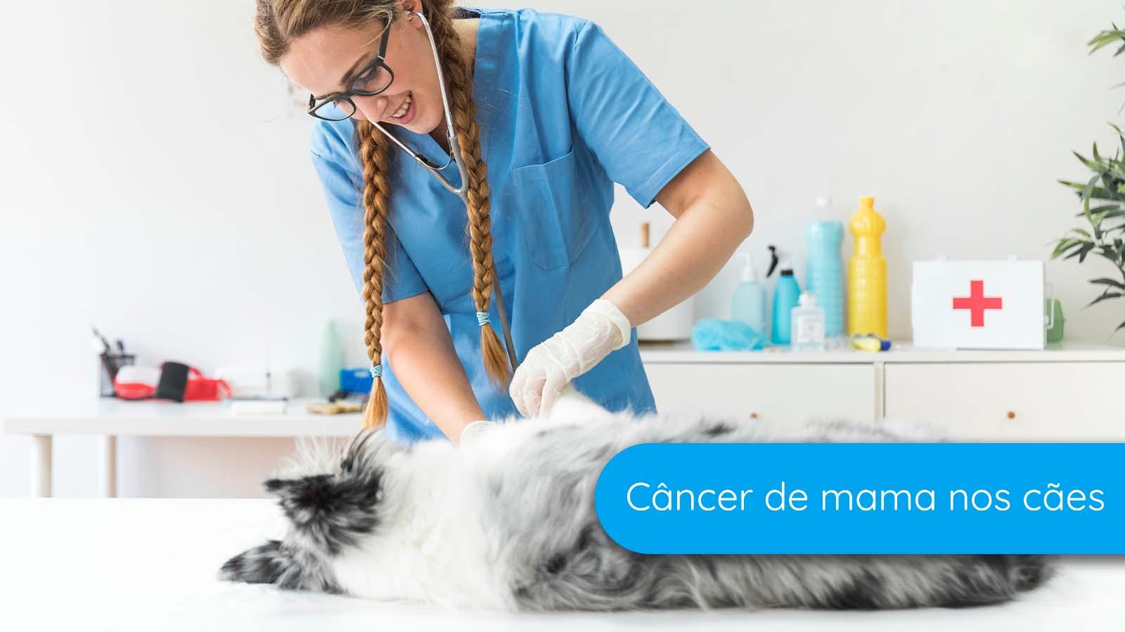 Cachorros podem ter câncer de mama?
