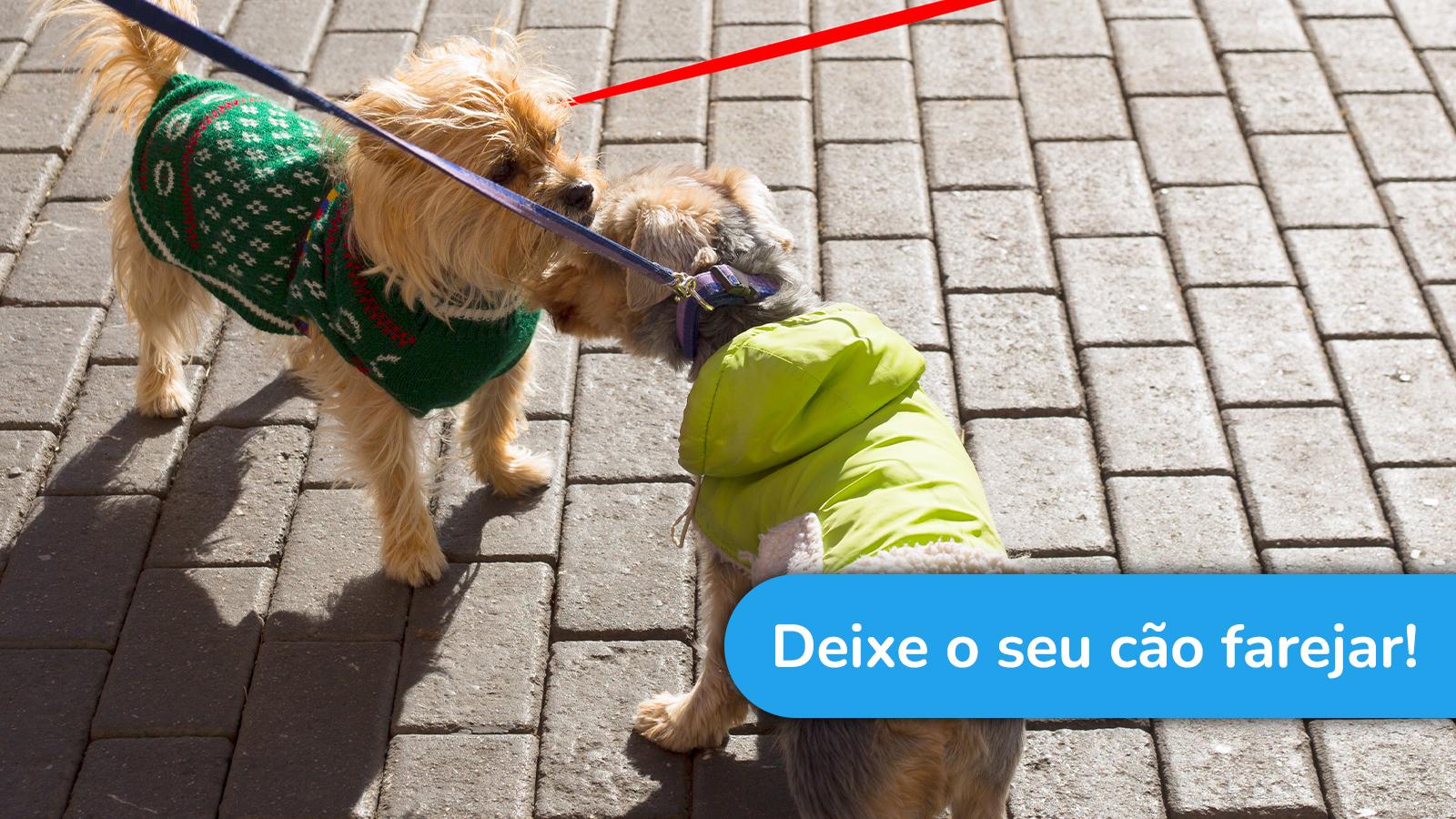 Deixe o seu cão farejar
