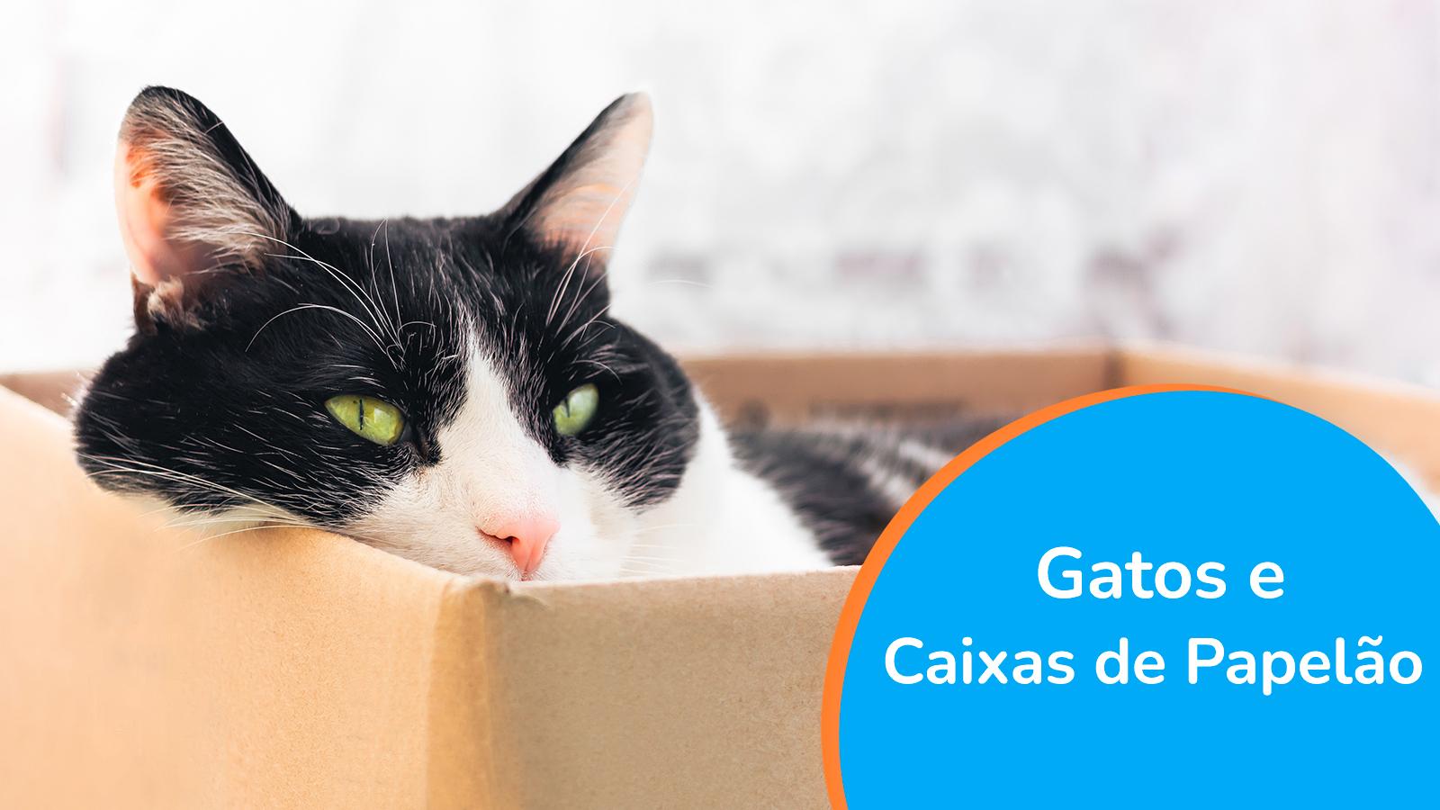 Gatos e Caixas de Papelão, de onde vem esse amor todo?