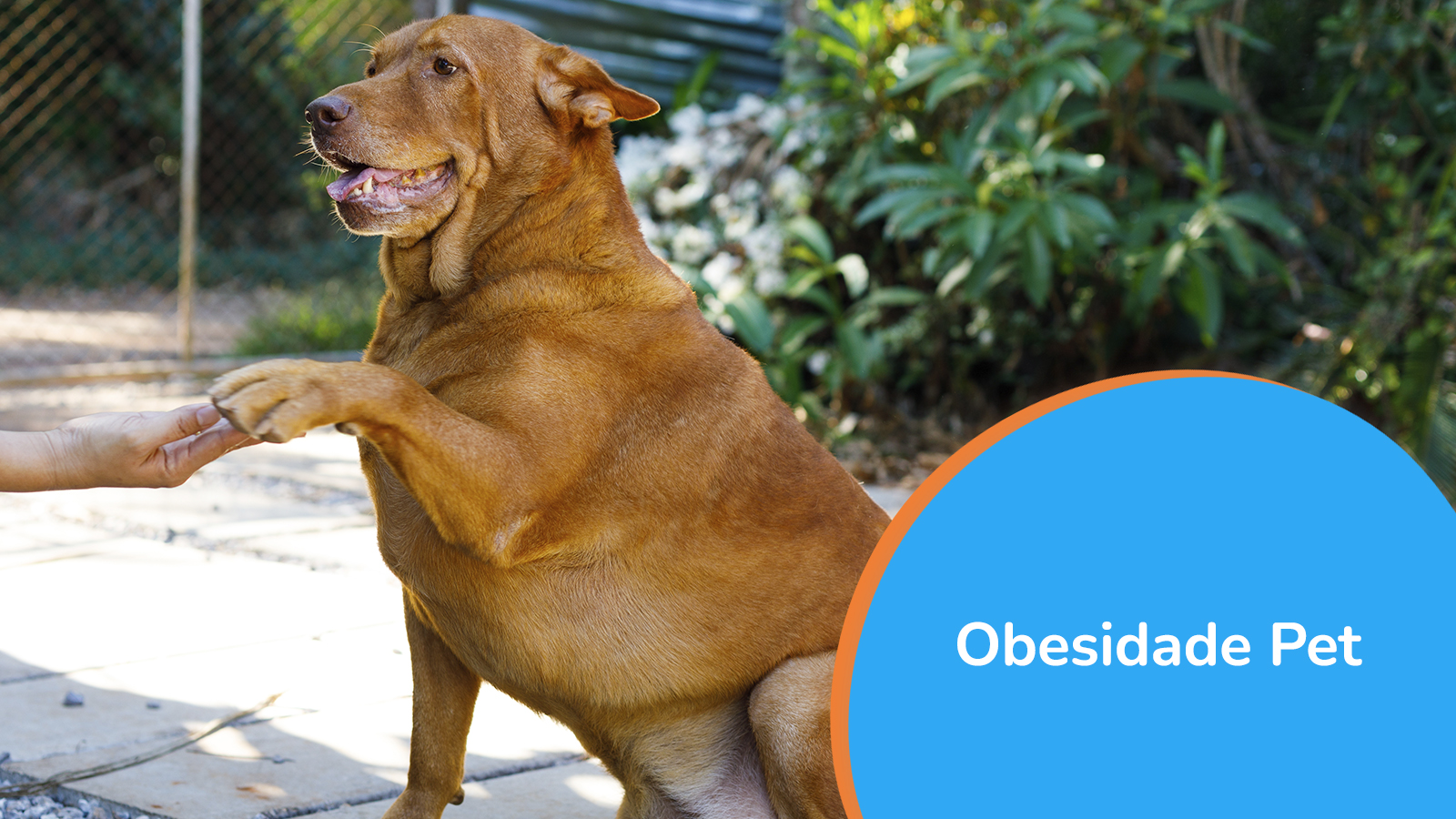 Obesidade Pet