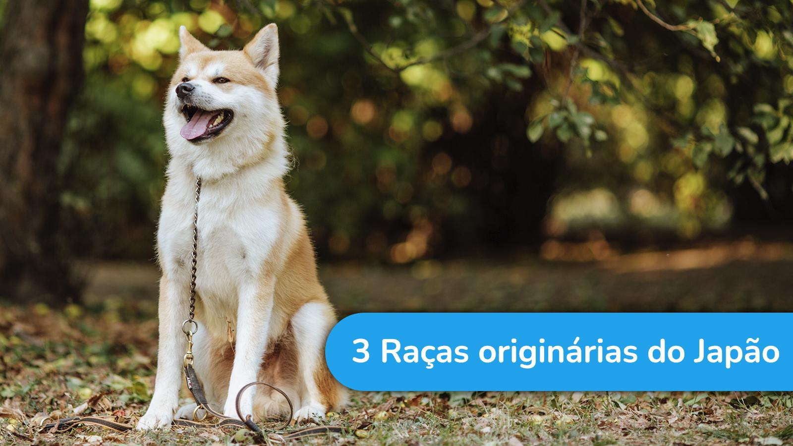 3 raças de cães originárias do Japão