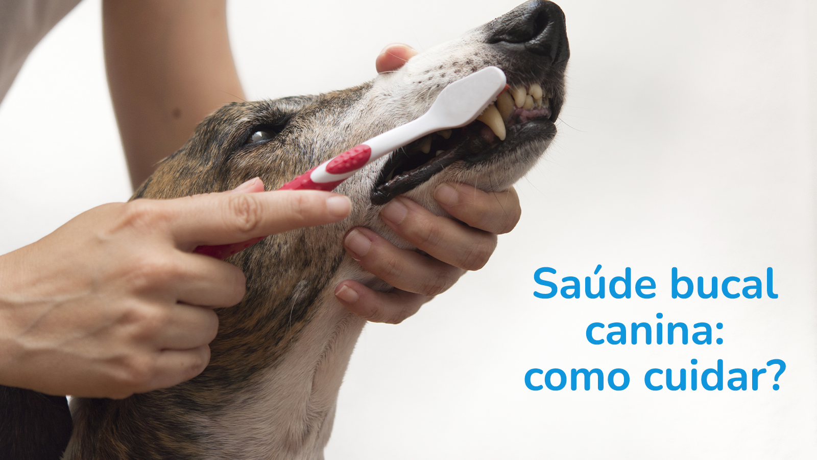 Saúde Bucal Canina