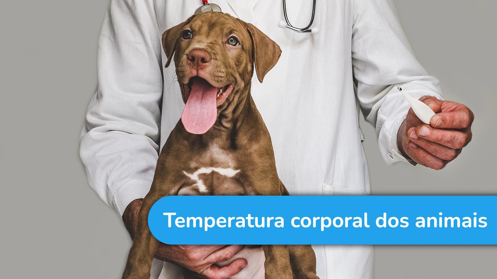 Os animais possuem a temperatura corporal como a dos humanos?
