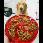 comedouro lento cães buddy toys